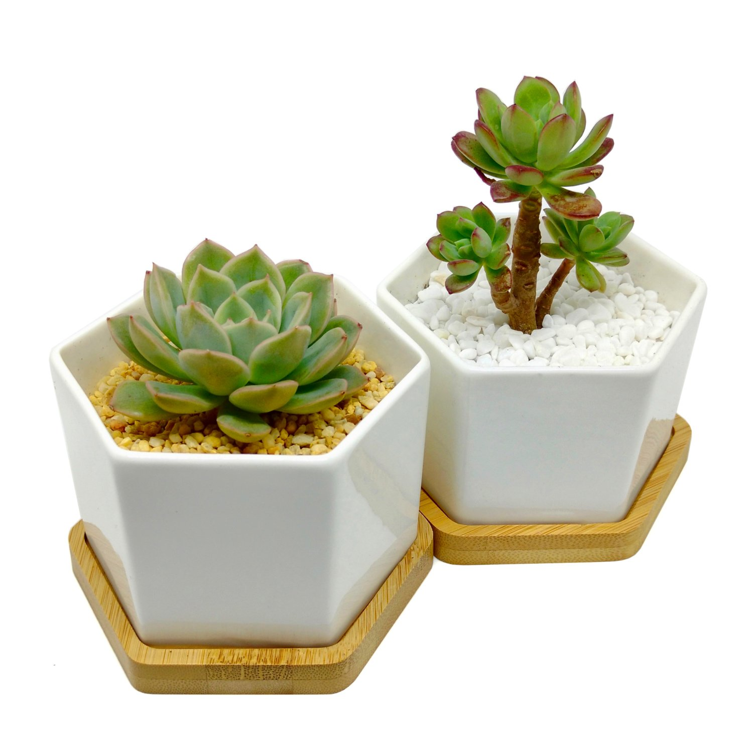 4-Inch Hexagonal White Ceramic Succulent Planter with Bamboo Tray | Set of Two | Minimalist Design