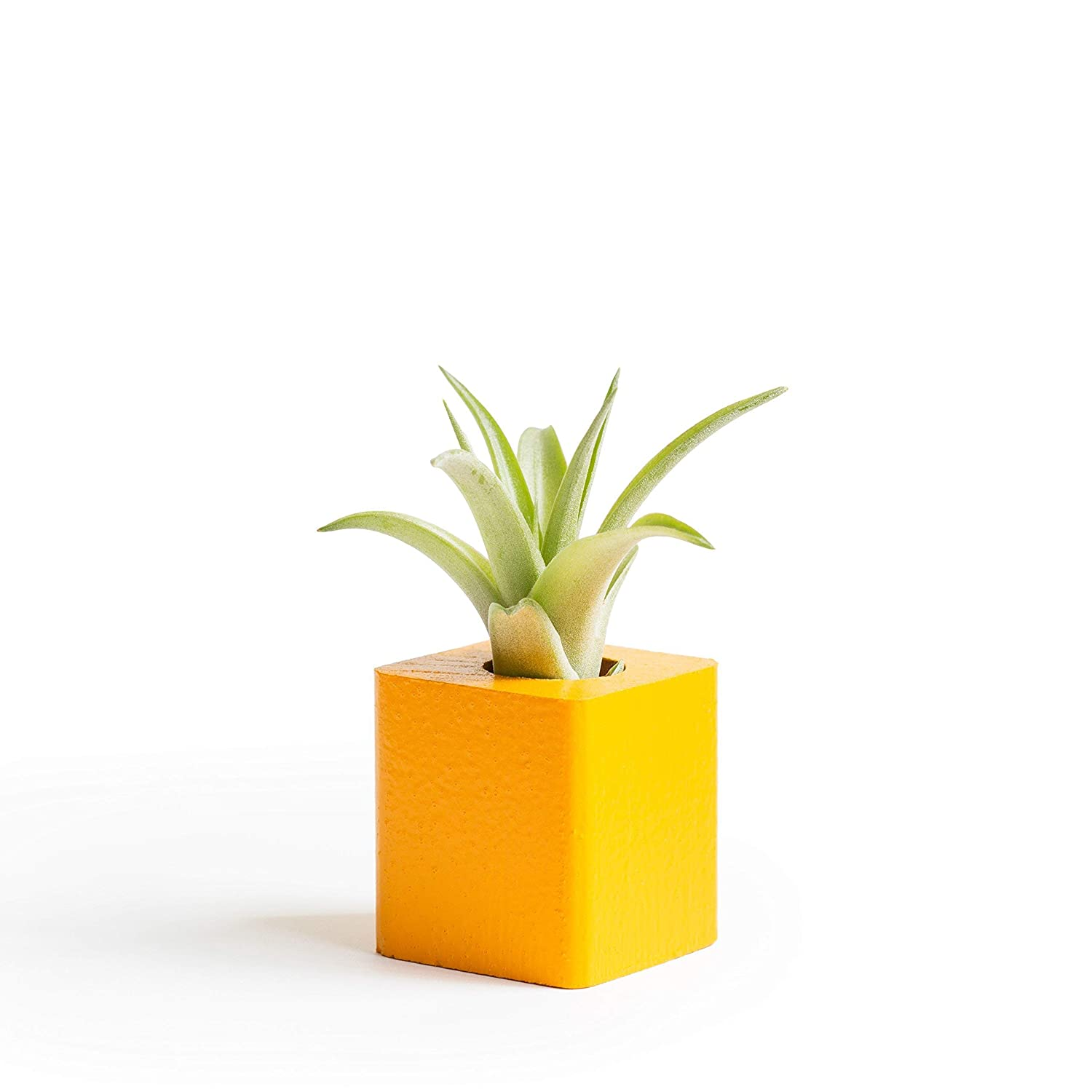 Airplant Display Small Plant Gift Air Plant Magnet Office Magnet Magnetic Board Magnet Girlfriend Gift Cute Office Gift Orange Refrigerator Plant Magnet