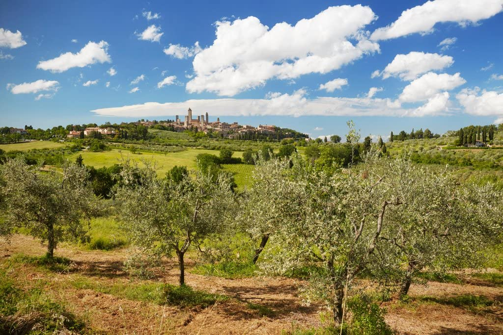 Olive Trees in Front of San Gimignano Province of Siena Tuscany Italy Photo Photograph Cool Wall Decor Art Print Poster 18x12