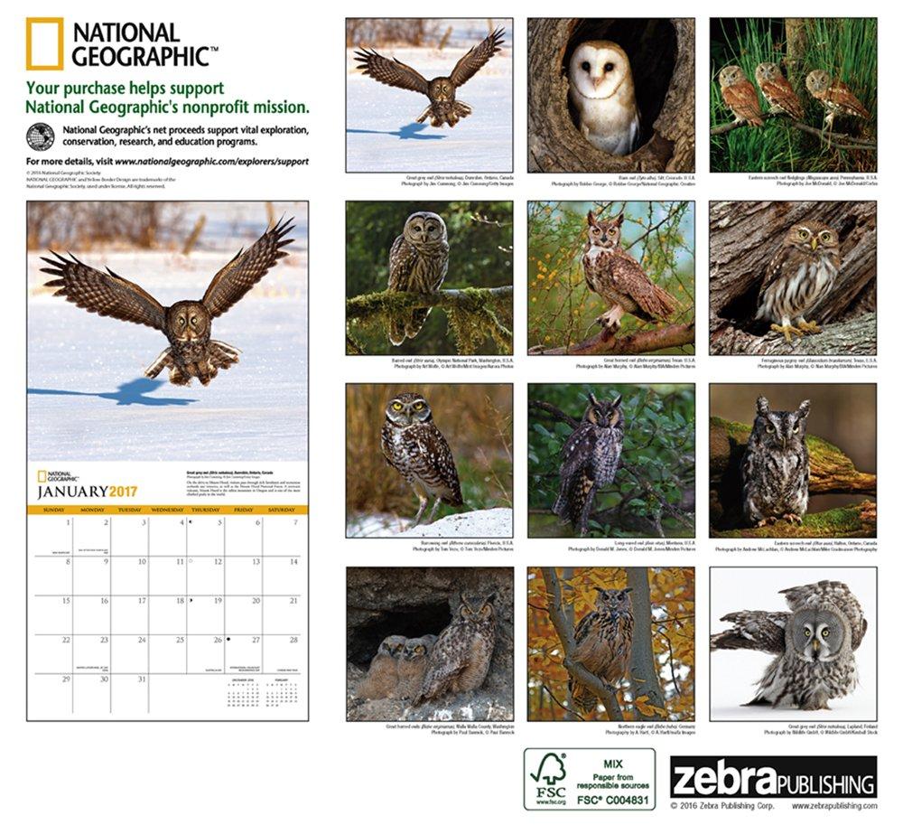 amazon com national geographic owls 2017 wall calendar