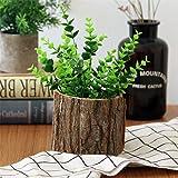 Lembeauty corteccia Flower pot desktop foresta stile naturale in legno piccola pianta grassa vaso per home office, legno, L