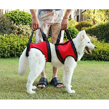 Perros arnés Perros ascensor apoyo rehabilitación arnés ayuda ...