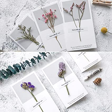 Amazon Baifeng Thanksgiving Greeting Cards 6pc Assortment Blank