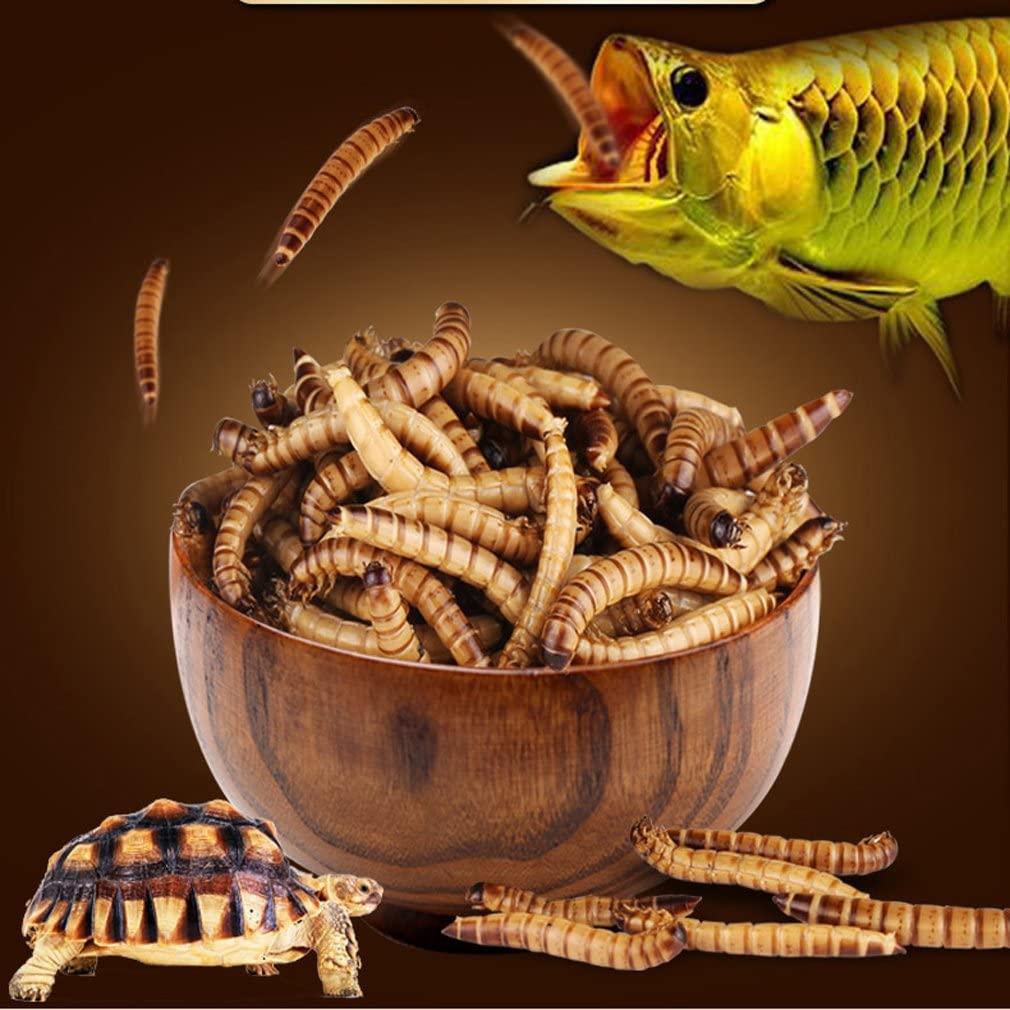 JackSuper 280g High Protein Turtle Food Mealworms Bulk Fresh Dried Mealworms Treats for Reptile Snacks Bird Chicken Fish Food