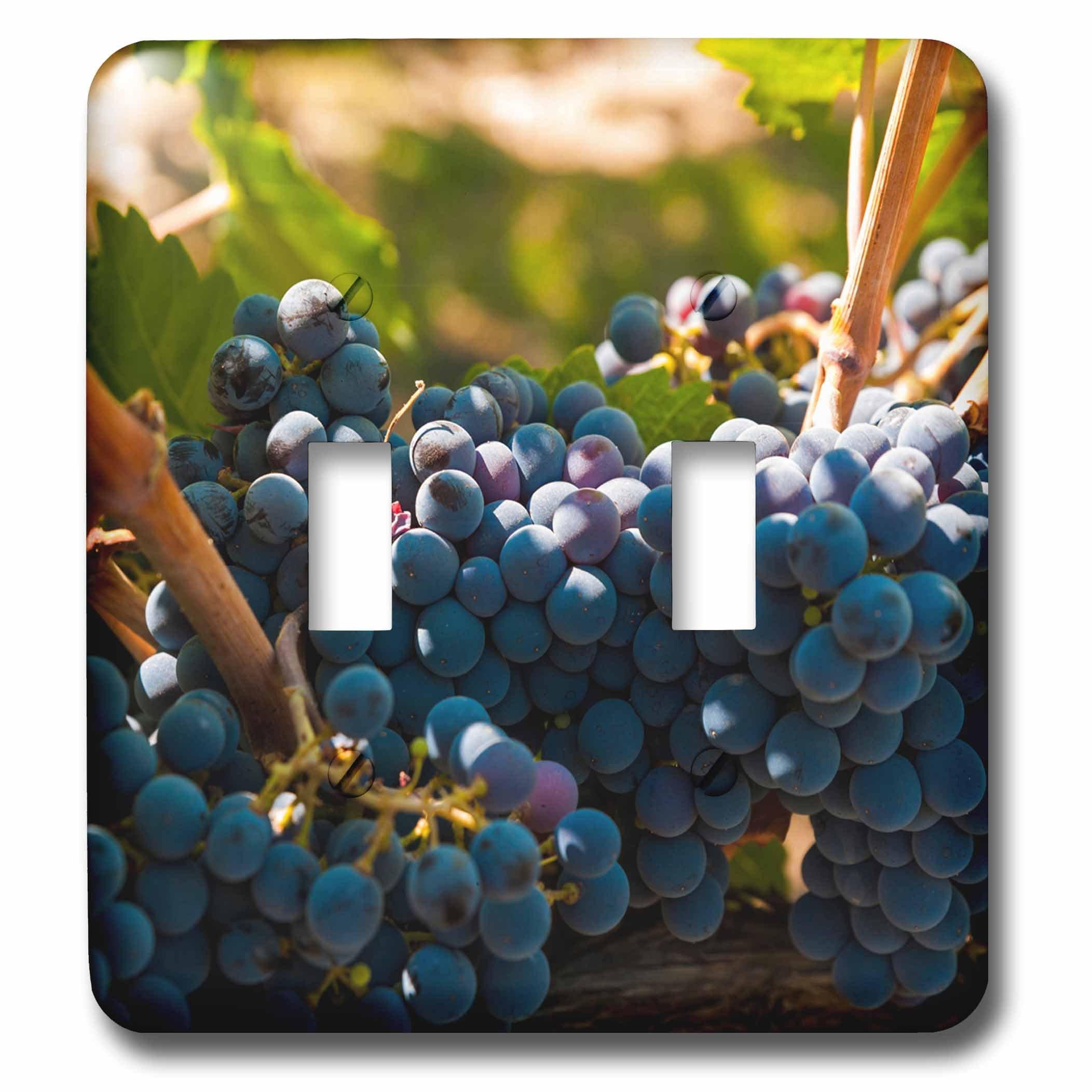 3dRose LSP_260510_2 USA, Washington, Red Mountain. Petit Verdot Grapes in a Vineyard Toggle Switch,
