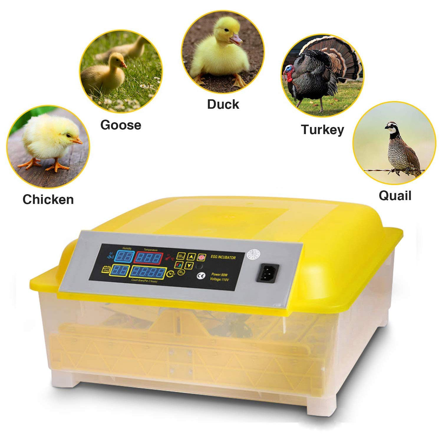 Noeler Egg Incubator Digital Automatic Incubators with Egg Turning,Chicken Duck Goose Quail Birds Fertile Eggs for Hatching (48 Egg Incubator) by Noeler
