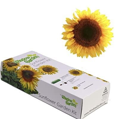 Window Garden - Mammoth Sunflower Flower Starter Kit - Grow Your Own Beauty. Germinate Seeds on Your Windowsill Then Move to Planter or Beds. Mini Greenhouse System Make's it Foolproof, Easy and Fun. : Garden & Outdoor