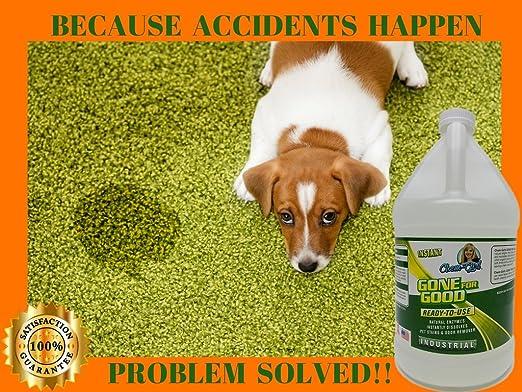 Gone para Good - Super Enzymatic Quitamanchas, eliminar el olor de orina fuerte gato y un perro Pee smell-clean carpet- rug- camas para perros floor- enzima ...
