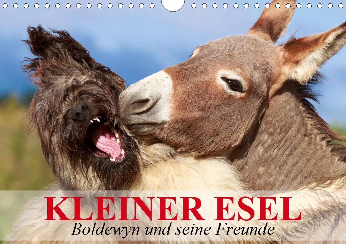 Kleiner Esel. Boldewyn Und Seine Freunde  Wandkalender 2020 DIN A4 Quer