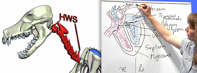Praxisorientierte Anatomie und Physiologie beim Hund, Katze und ...