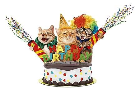 Happy Cumpleaños Gatos Gatos Letrero de Metal Placa de Metal ...
