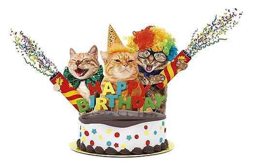 Happy Cumpleaños Gatos Gatos Letrero de Metal Placa de Metal Signo ...