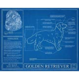 Golden Retriever Blueprint