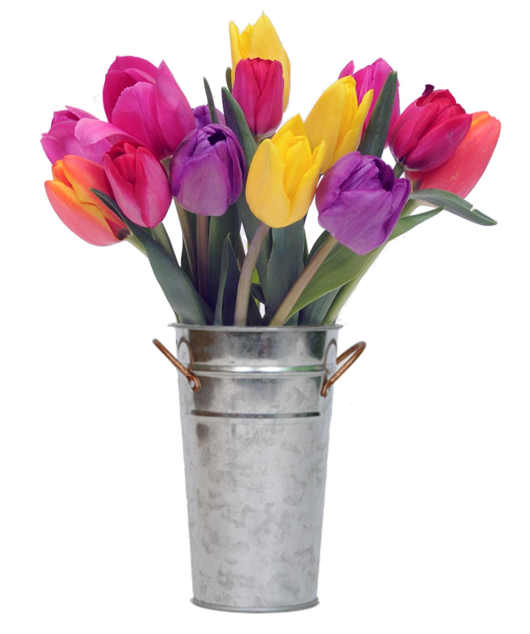 Stargazer Barn - Happy Bouquet - 15 Stems Fresh Tulips with Vase - Farm Direct