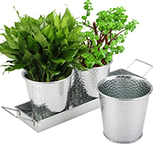 Cedilis 3 Herb Pots with Tray Set, Windowsill Galvanized Planters, Indoor Outdoor Vintage Pots with Drainage Holes for Kitchen Garden Healthy Plants, Three Flower Pots, A Tray with Handles