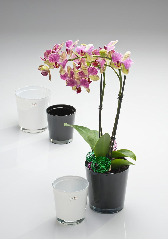 flowerpot ORCHID glass cachepot, 10cm, black Sandra Rich
