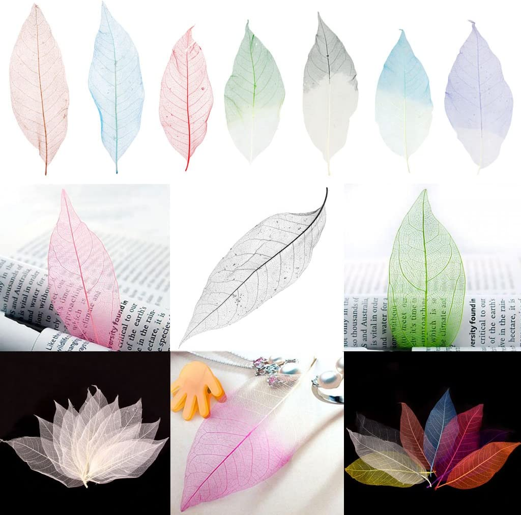 Resin Casting Fityle 100 Pieces Green Pressed Real Dried Magnolia Skeleton Leaves for Scrapbook Crafts DIY Crafts Handmade Ornaments Candle Making