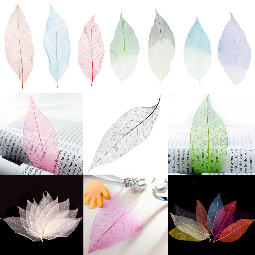 Length 13-15cm Prettyia 50 Pieces Pressed Natural Dried Magnolia Skeleton Leaves Embellishment for Scrapbook Crafts DIY Home Ornament Crafts