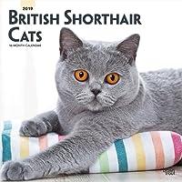 British Shorthair Cats 2019 Square Wall Calendar