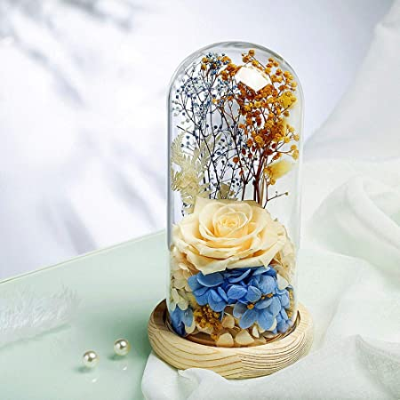 Rosa Encantada Flores preservadas en cúpula de cristal Rosas ...