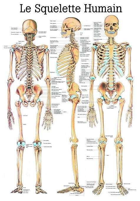 ruediger Anatomie Pa03 le Squelette Humain Tableau ba64ff32a85
