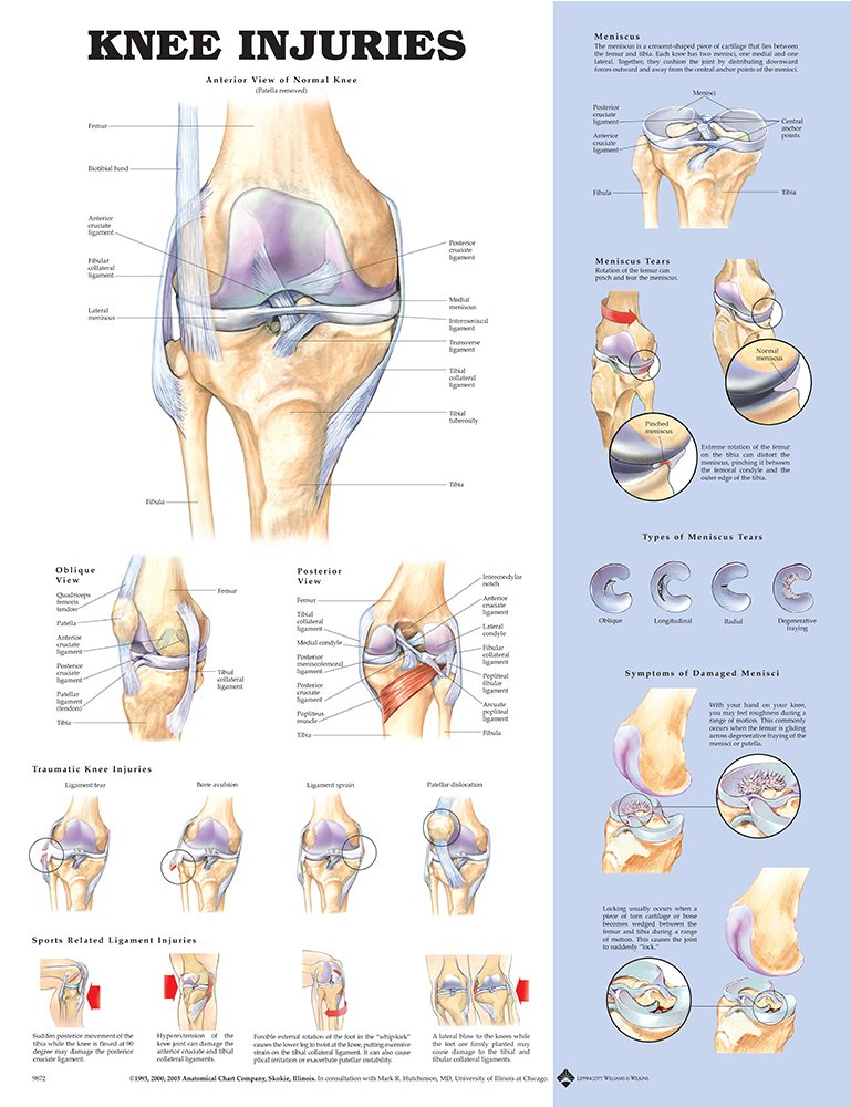 Amazon Anatomical Chart Co Knee Injuries Laminated Health