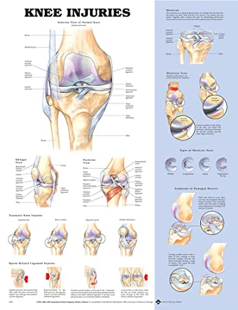 Amazon.com: Anatomical Chart Co Knee Injuries - Laminated: Health ...