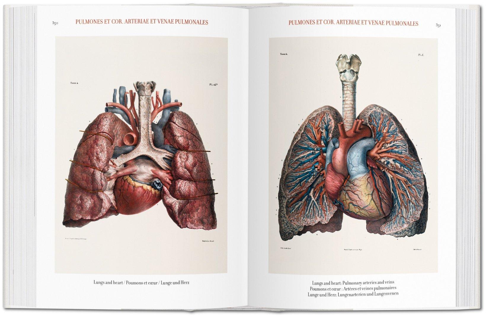 Ungewöhnlich Halsmuskelanatomie Abbildungen Zeitgenössisch ...