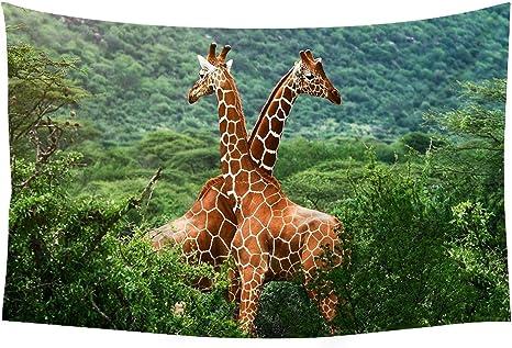 Yellow-Billed Oxpeckers /& Giraffe Africa Wall Art South Africa \u2022 Nature Postcard \u2022 Wildlife Photography Fine Art Kruger National Park