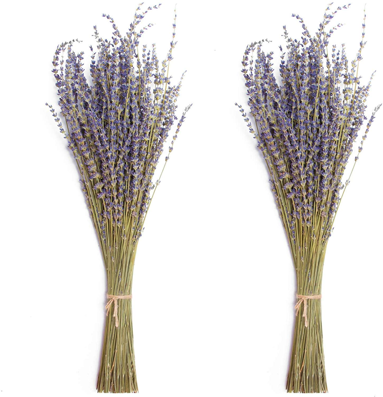 Global footprint Dried Lavender Bundles 100% Natural Dried Lavender Flowers for Home Decoration, Photo Props, Home Fragrance, 2 Bundles Pack by Global footprint