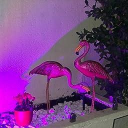 Verde Jem gsgd46 – 2 flamencos Metal jardín decoración – Natural (2 Piezas): Amazon.es: Jardín