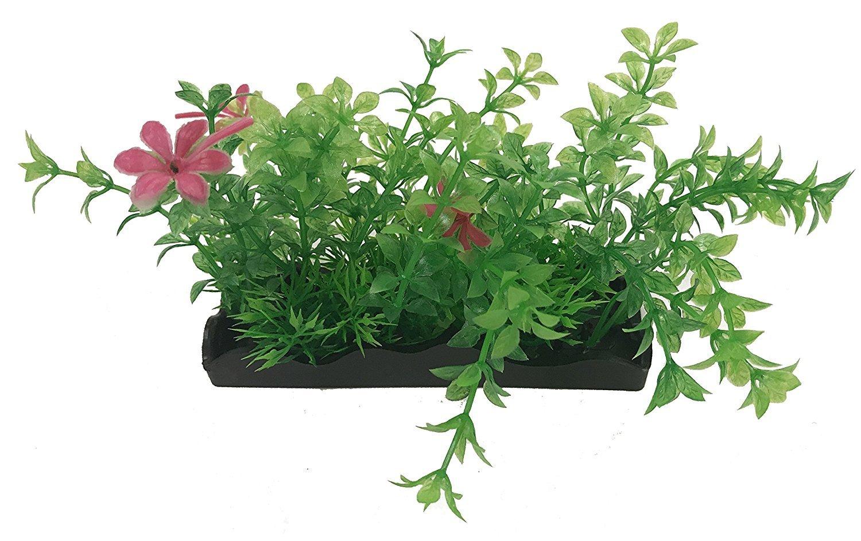 Foregrounder aqua-scaping Small – Landscape Small Bunch植物 – B075RD71GX Lushを作成Aquatic Landscape Instantly SHOMHOMNK45820 B075RD71GX Medium Green/ Pink, 新しい季節:69549887 --- ijpba.info