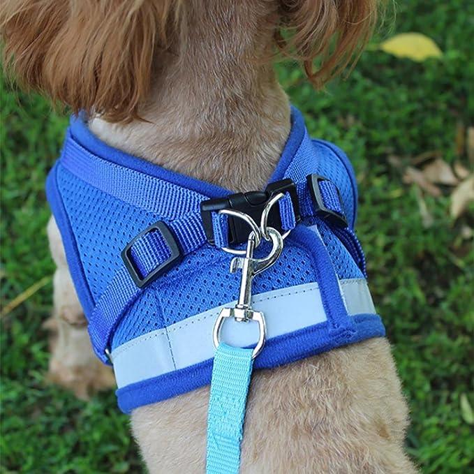 Zolimx® Ropa para Mascotas Perros, Mascotas Cachorro Perro Suave Malla Caminar Pecho Collar Correa Durable al Aire Libre Chaleco: Amazon.es: Deportes y aire ...