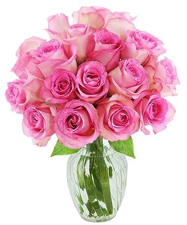 Kabloom Ramo de 18 rosas rosas frescas (fresco, tallo largo ...