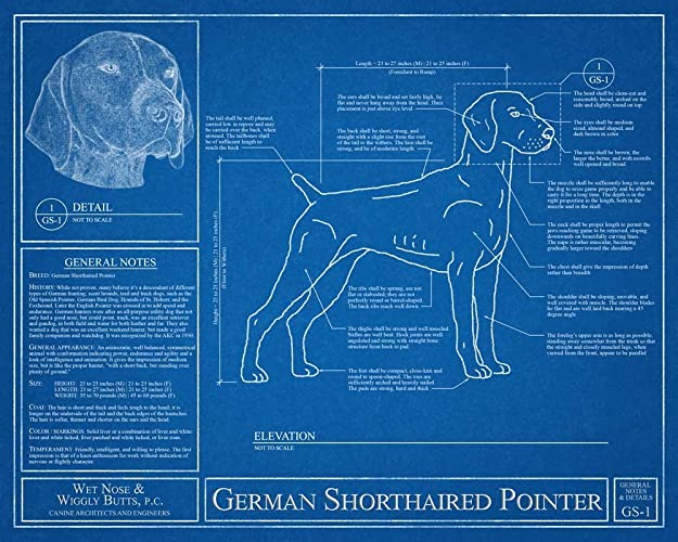 Amazon german shorthaired pointer blueprint handmade german shorthaired pointer blueprint malvernweather Image collections