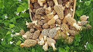 Yellow Morel Mushroom Spores Dried Sawdust Bag Mushrooms Spore Grow Kit