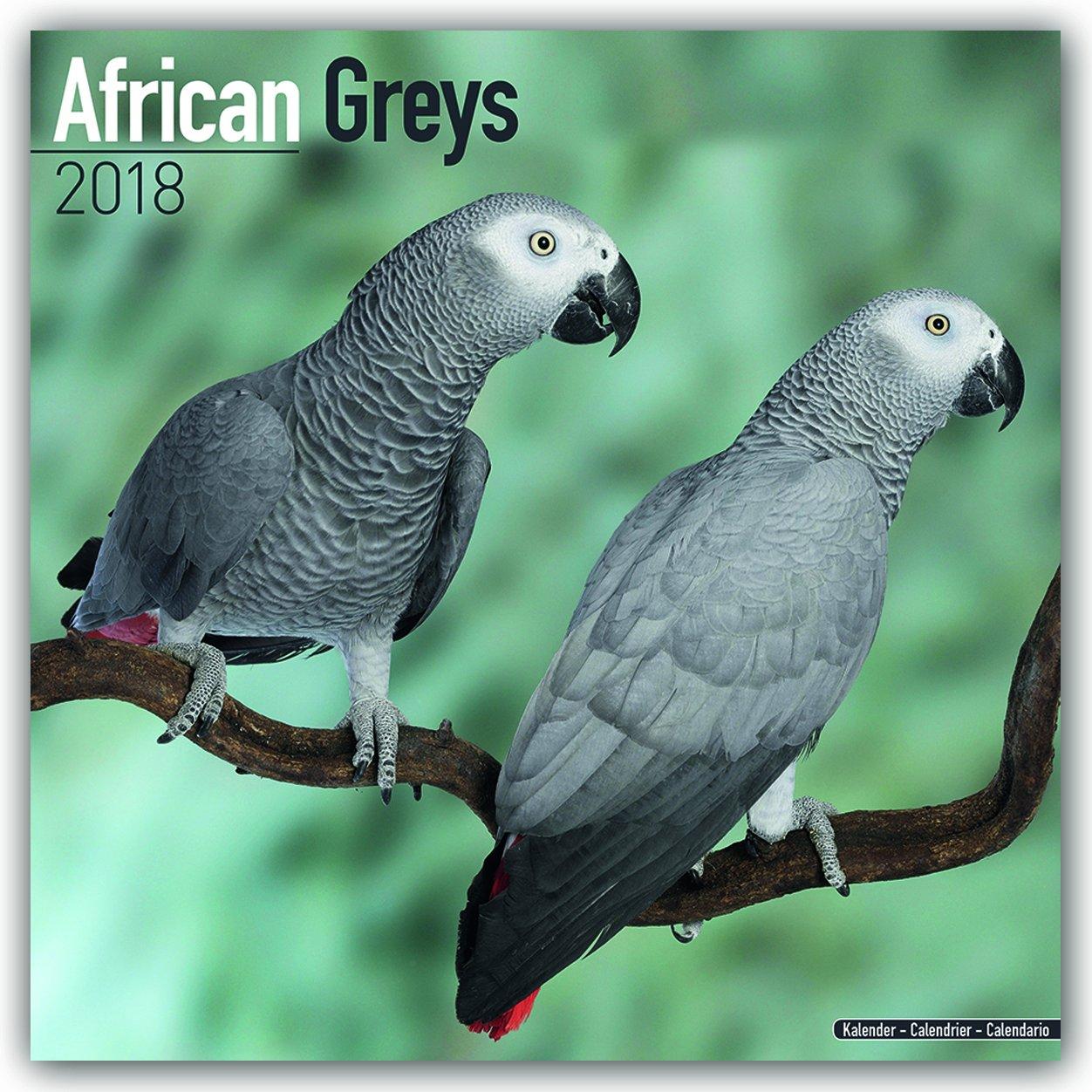 African Greys - Graupapageien 2018: Original Avonside-Kalender [Mehrsprachig] [Kalender] (Wall-Kalender)