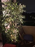 Perfect Ambience Lighting for the Balcony!
