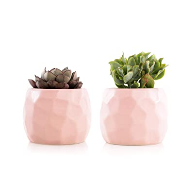 Plants by Post Live Succulent Set in 2.5 Geometric Ceramic Pot (Set of 2), Pink Geo: Garden & Outdoor