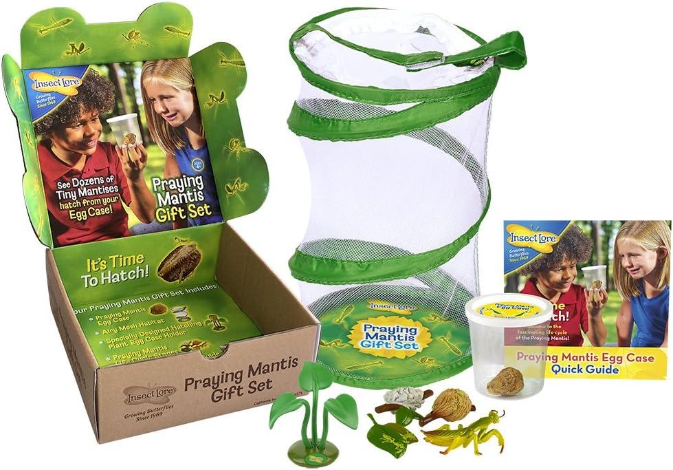 Amazon Com Insect Lore Live Praying Mantis Hatching Kit Gift Box