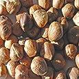Indus Organics Jumbo Turkish Raw Hazelnuts, 1 Lb Bag, Sulfite Free, Salt Free, Premium Grade, Freshly Grade