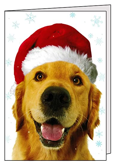 5 golden retriever holiday cards with envelopes cute wishing you a very merry