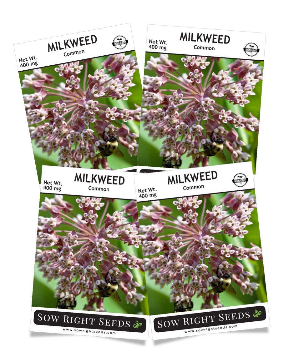 Sow Right Seeds Common Milkweed Seeds; Attract Monarch Butterflies to Your Garden; Non-GMO Heirloom Seeds; Full Instructions for Planting, Wonderful Gardening Gift (4) by Sow Right Seeds