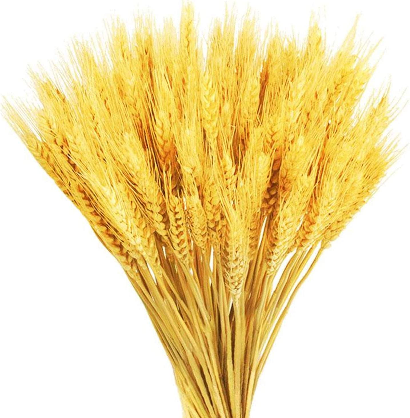 GTIDEA 100 Stems Dried Wheat Stalks Golden Natural Wheat Ears Flowers Fall Wedding Flower Bouquet for Home Farmhouse Party Decor (16.9 Inch)