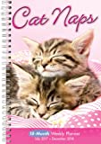 Cat Naps 2018 Engagement Calendar (CW0220)