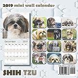 Shih Tzu 2019 Mini Wall Calendar