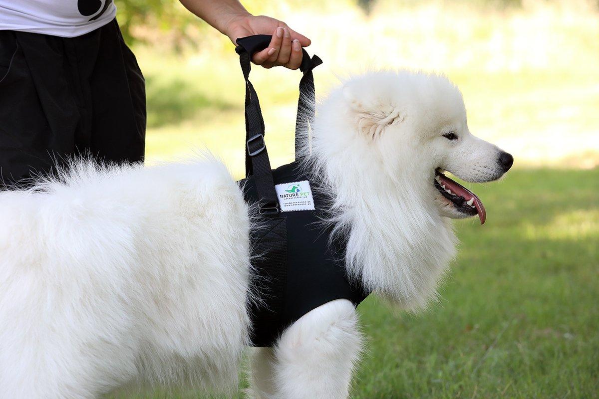 Nature Pet Perros portabebés Delantera/Andador Perro Delantera ...