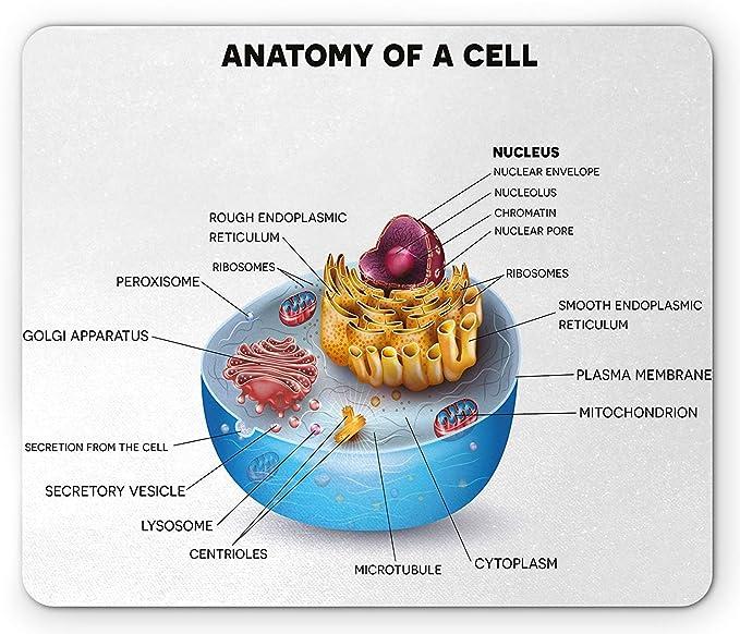 Alfombrilla de ratón educativa, componentes microscópicos de ...