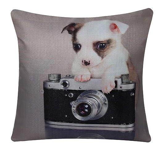 Bullahshah Perrito Chihuahua el Fotógrafo Cuadrado de Animal ...