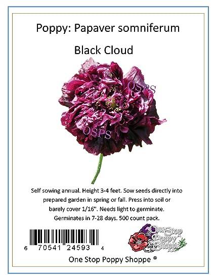 Amazon 500 Poppy Flower Seeds Papaver Black Cloud Poppies
